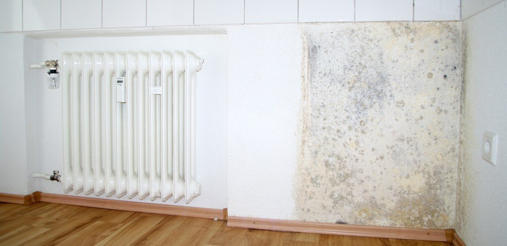 mold and mildew contaminants
