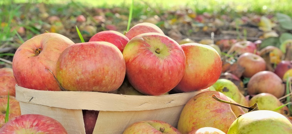 Vinegar made from apples