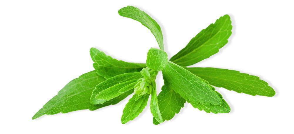 Stevia facts