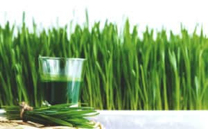 Glass of wheatgrass juice made with the best juicer in front of a field of wheatgrass.